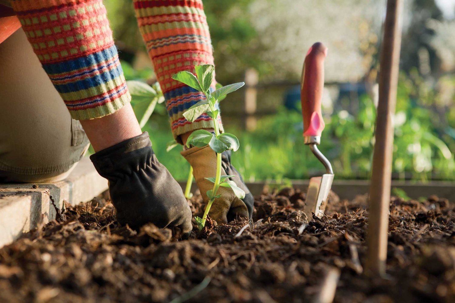5 Essential Gardening Tips From Reliable Plant Expert in UK