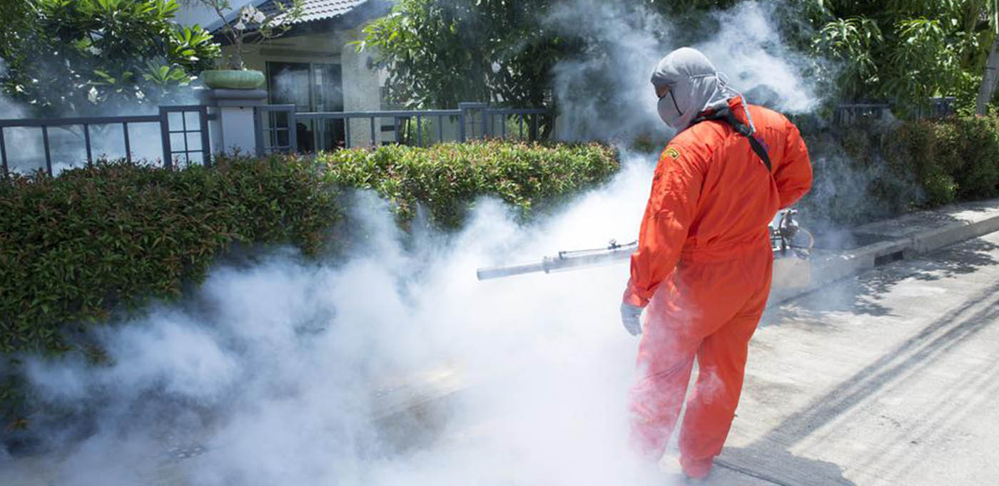 Pest Control Why You Need To Hire Wasps Control Services