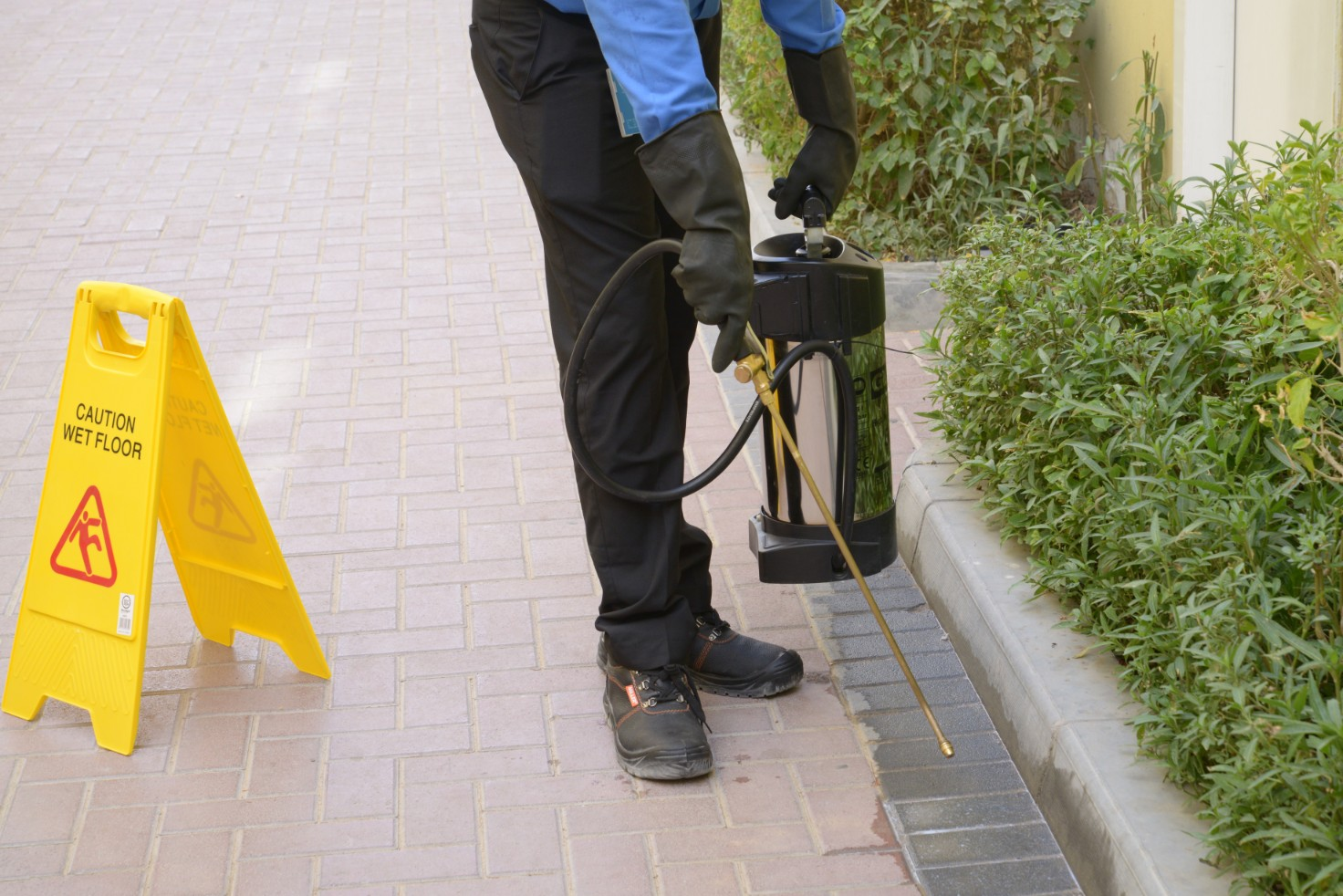 Why Consider Insect & Pest Control Services?